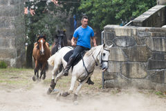 Horse fair Stock Images