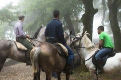 Horse fair Royalty Free Stock Photography