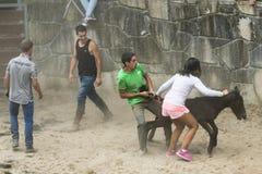 Horse fair Stock Image