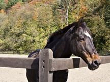 Horse in Fall Royalty Free Stock Photos