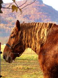 Horse in the Fall. Horse standing in the morning light with fall colors in the background Royalty Free Stock Photos