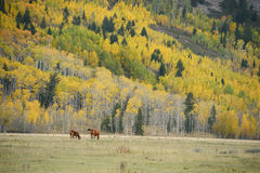 Horse with fall color Stock Images