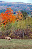 Horse in the fall Royalty Free Stock Photos