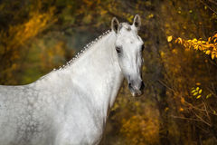 Horse  on fall Royalty Free Stock Images