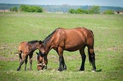 Horse Family Stock Photos