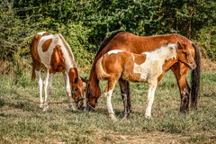 Horse family. In the garden Stock Photos