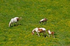 Horse family Stock Photography