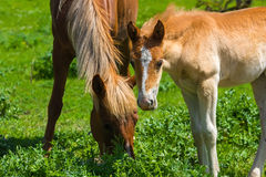Horse family Stock Images