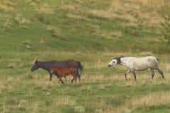 Horse family near the farm stock image