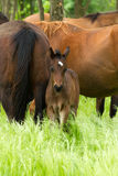 Horse family Royalty Free Stock Photo