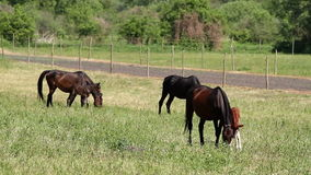 Horse family stock footage