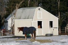 Horse on farm. In massachusetts Royalty Free Stock Images
