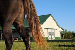 Horse on Farm. Brown Horse Grazing on a Farm Royalty Free Stock Photos
