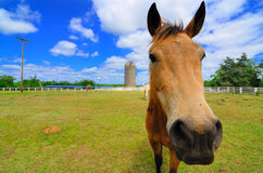 A Horse on a Farm Royalty Free Stock Photo