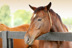 Horse on a farm Royalty Free Stock Image