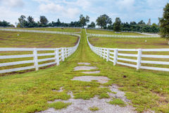 Horse farm Stock Photo