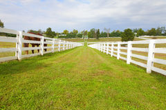 Horse farm Stock Images