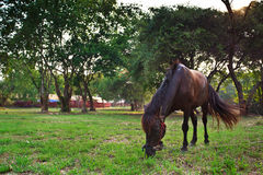 HORSE in a farm Stock Photos