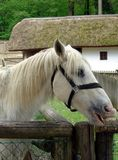 Horse on the farm. In the zoo garden Stock Photography