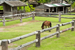 Horse in farm. Royalty Free Stock Photo