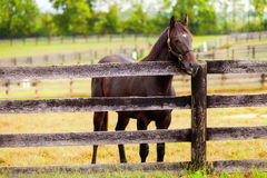 Horse on a farm. Image of a beautiful brown horse standing by the fence Stock Photo