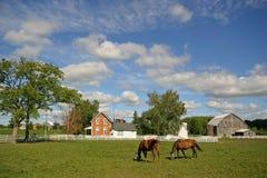 Horse farm Stock Images