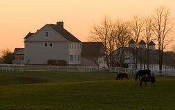 Horse Farm. Three horse grazing in the fields in front of the house and barn stock photo