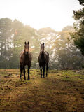 Horse in farm. From countryside of Australia stock photos