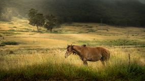 Horse in farm. From countryside of Australia royalty free stock photo