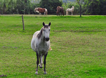 Horse on a farm Royalty Free Stock Photography