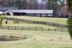 Horse Farm. Horses at the Ranch with Geese in the Foreground stock images