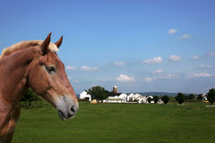 Horse and farm. In Lancaster County, PA royalty free stock image