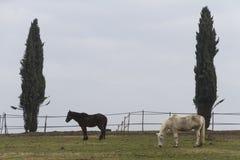 Horse in the farm stock photos