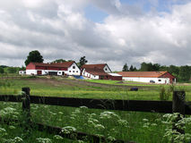 Horse farm. In denmark a sunny summer day Stock Image