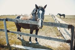 Horse farm, animal on fence background stock photography