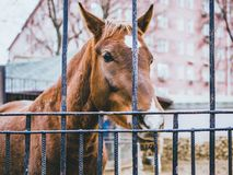 Horse in the farm autumn cage head close macro stock images