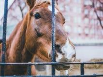 Horse in the farm autumn cage head close macro stock photo