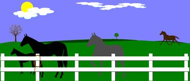 Horse farm Stock Photos