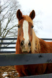 Horse Farm Royalty Free Stock Photo