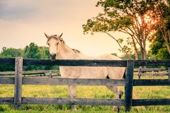 Horse of a farm royalty free stock photo