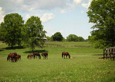 Horse Farm Royalty Free Stock Images