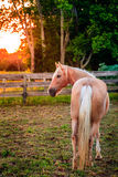 Horse of a farm Stock Images