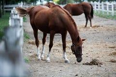 Horse farm Royalty Free Stock Image