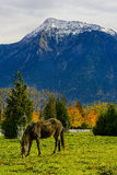 Horse on a farm in British Columbia, Canada Stock Image