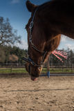 Horse on farm Royalty Free Stock Photo
