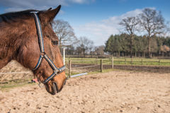 Horse on farm Stock Images
