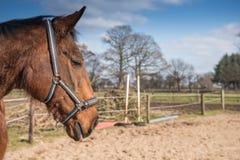 Horse on farm Stock Photo