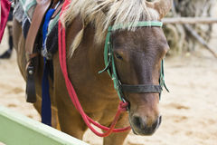 Horse on farm Chokchai Royalty Free Stock Photos