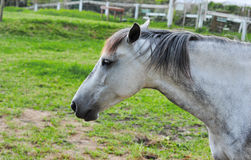 Horse on a farm,close up Royalty Free Stock Images