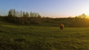 Horse on a farm. Horse is coming towards the camera on a farm in Central Kentucky at sunset stock footage